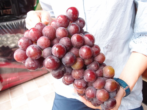 西安 ブドウ 果物 まなみヨガ