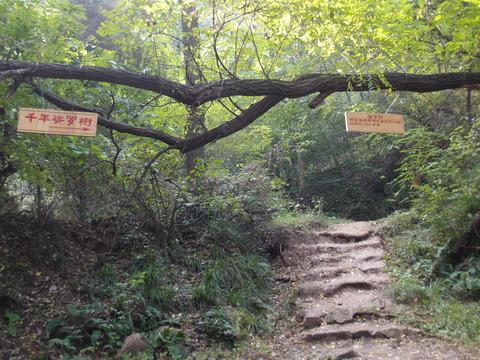 千年娑罗樹 小五山 登山 まなみヨガ 西安