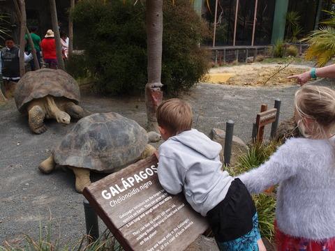 オークランド 動物園 ガラパゴスゾウガメ