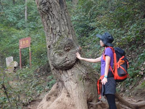 猿の顔 小五山 登山 まなみヨガ 西安20