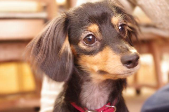 【キチ】愛犬を兄嫁に殺された弟が激怒!兄嫁を灰皿でボコボコにした