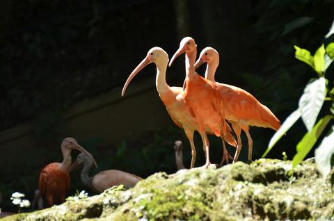 動物園 022
