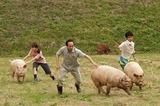 『サバイバルファミリー』豚