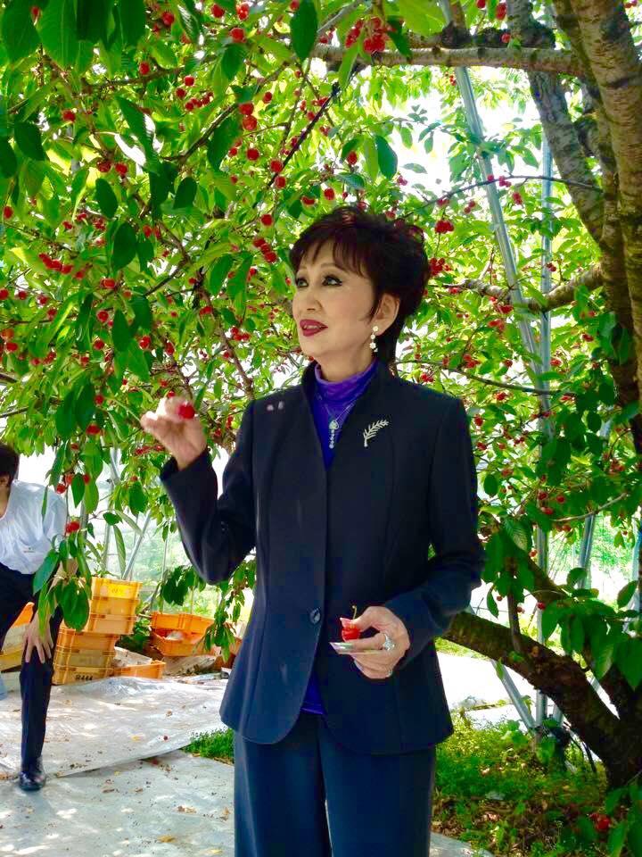 サクランボの木の下で手に果実を持って見つめる浅丘ルリ子