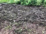草取り跡は耕した畑