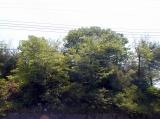 大阪:寝屋川の家 植栽