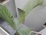 椰子の木の様子