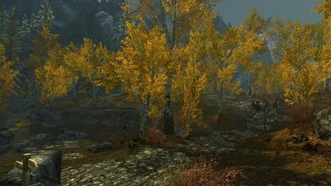 色鮮やかな木の葉