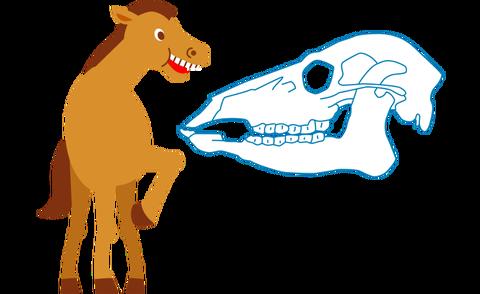 馬の口のつくり