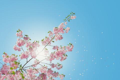 桜前線という言葉