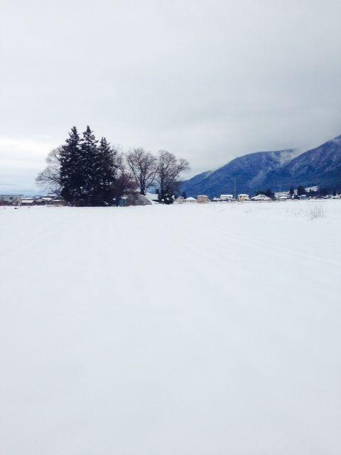 愛知県にも雪が降った日