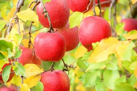 『りんごかもしれない』という絵本で授業する