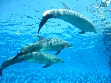【水泳学習】鼻に水が入る件