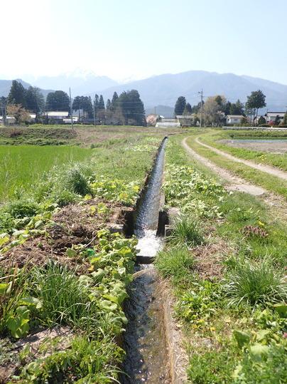 春の用水路