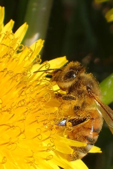 蜂の食事風景
