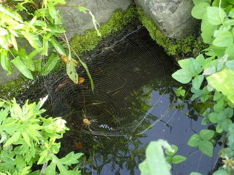 不思議な蜘蛛の巣の形