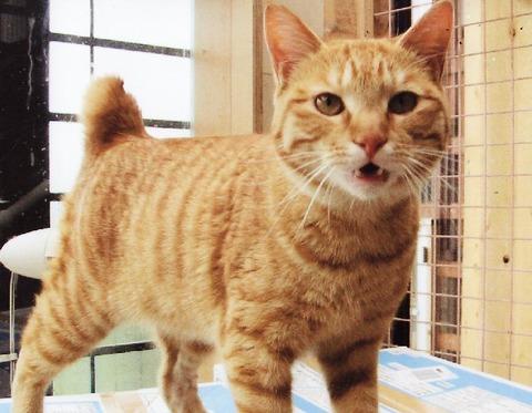 ねこさま王国 : 福島保護猫その他