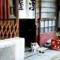 猫 日ノ出町1