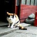 猫 日ノ出町3