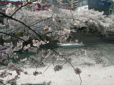 桜090407 001
