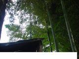 『竹やぶ』のそばの竹やぶ