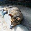 060421猫ひなたぼっこ