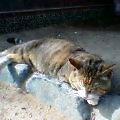 060421猫日向ぼっこ2