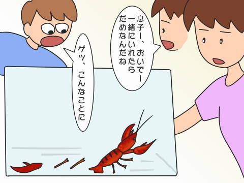 re-ザリガニ (2)