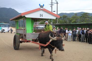 水牛車 (1)