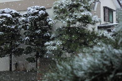 雪 (3)