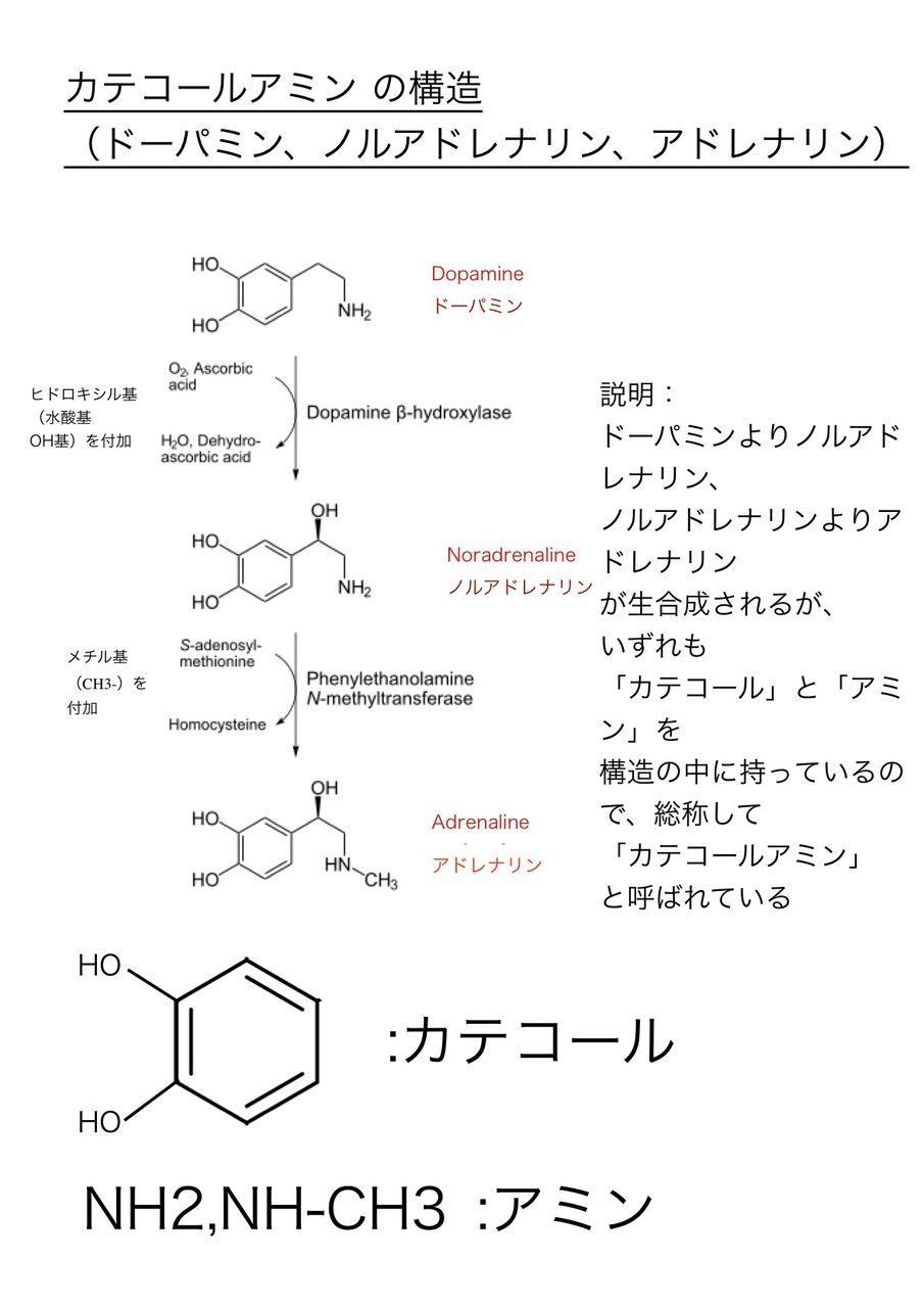 アドレナリン と ノルアドレナリン