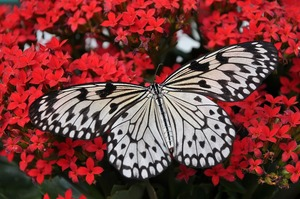 butterfly-1218884_960_720