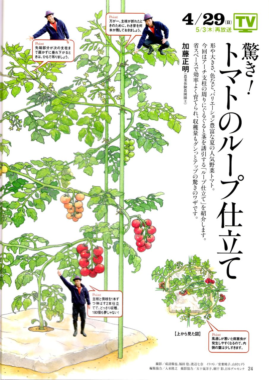 トマト 仕立て 本 ミニ 2