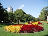 王立博覧会ビルとお花のじゅうたん