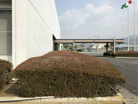 看板設置のための植木の撤去作業