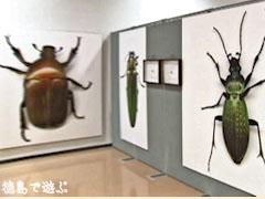 生きてる!昆虫図鑑 人間サイズの昆虫写真