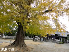 徳島県板野郡板野町羅漢 地蔵寺のイチョウ 2014