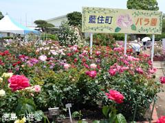 徳島県板野郡藍住町 春のバラ祭り 2015