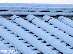 徳島 初雪 2016年1月19日