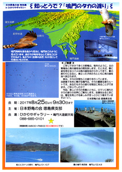 徳島県鳴門市 特別展 鳴門のタカの渡り in ひかりや ギャラリー 2017
