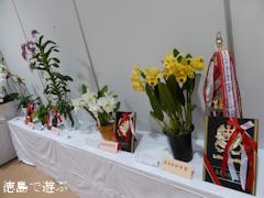 第57回 徳島洋蘭展 2014