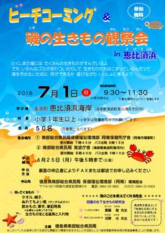 徳島県 美波町 恵比須浜 ビーチコーミング 磯の生きもの観察会 2018