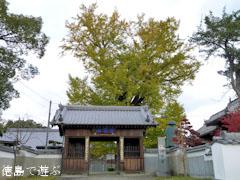 地蔵寺のイチョウ 2010