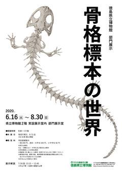 徳島県徳島市 文化の森 部門展示 骨格標本の世界 2020