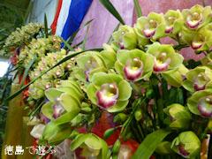 世界一の花 シンビジウム 親王