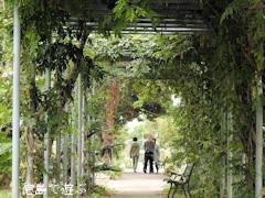 徳島県徳島市国府町 徳島大学 薬用植物園 2015