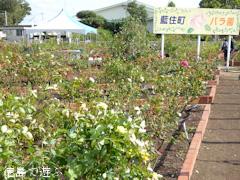 徳島県板野郡藍住町 あいずみ 秋のバラまつり 2016