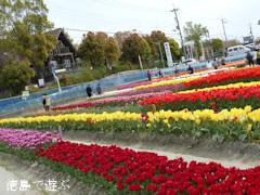 徳島県板野郡北島町 きたじまチューリップフェア 2014