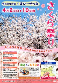 徳島県名西郡神山町 神山森林公園 イルローザの森 さくら祭り 2016