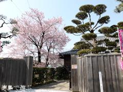 徳島県徳島市かちどき橋 原田家住宅 蜂須賀桜 2015